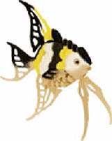 Angel Fish picture